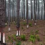 Wald Marinha Grande